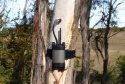 SFM1 Sap Flow Meter in Gum Tree