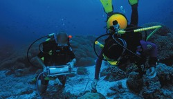 Studying aquatic photosynthesis using a DIVING-PAM equipped with fiber tip holder DIVING-SH.