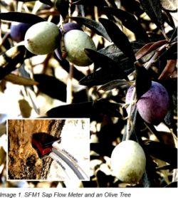 HRM in olive plantation