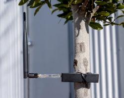 LoRaWAN Test Kit on Tree